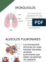 Los Bronquiolos