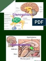 hypothalamus a prostata schema
