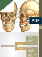 Huesos de Cráneo y Cara