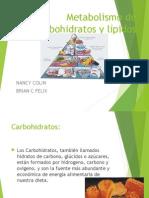 metabolismo de lipidos y Carbohidratos Brian