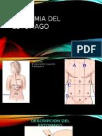 ANATOMIA DEL ESTOMAGO.pptx