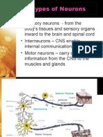 chap2 day1 5 neuron rv