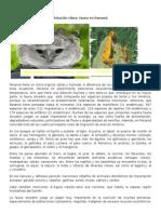 Relación Clima flora y fauna en Panamá
