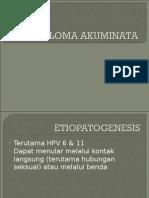 k.akuminata & p.pubis 2003