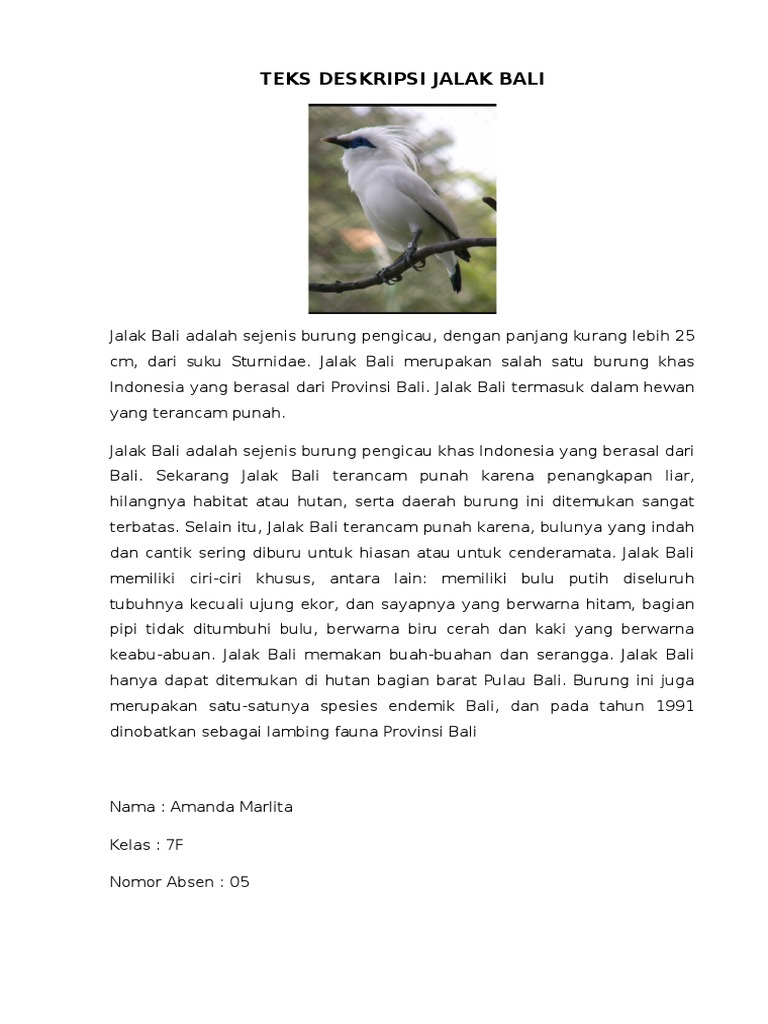 Teks Deskripsi Jalak Bali