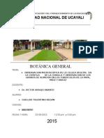 •OBSERVACION MICROSCOPICA DE LA CELULA VEGETAL  EN LA CATAFILA       DE LA CEBOLLA Y OBSERVACION DE LOS GRANOS DE ALMIDON EN LOS TUBERCULOS DE LA PAPA, MAIZ Y ARROZ