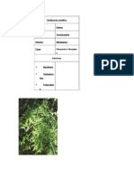 Helecho Botanica Sistematica