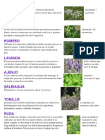 15plantas medicinales