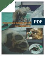 Sebenta anestesia geral em pequenos animais.pdf