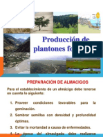 Plantacion Forestal