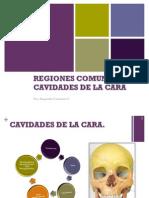 regiones comunes de la cara