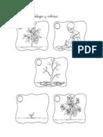 Ordena Secuencias La Planta