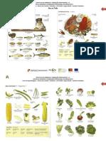 alimentos_alemão (Guardado automaticamente).pdf