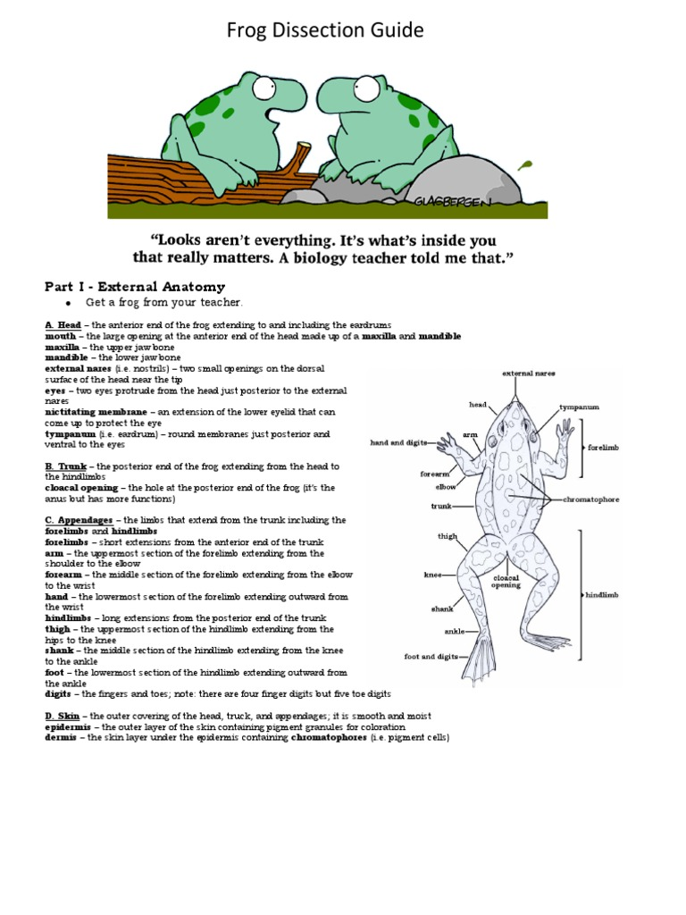 Frog Dissection Lab   Mouth   Anatomical Terms Of Location