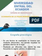 1. Ecografía de La Pelvis Normal Femenina