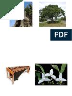 simbolos de Gutemala