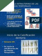 Desarrollo de Las Piezas Dentales