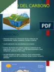 El Ciclo Del Carbono