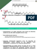 Aula Digestão Absorção Transporte e Oxidação Dos Lipídeos