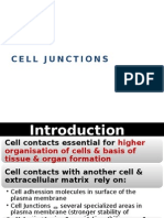 BBS1-HL1-K3 Cell Junction-Intercellular Communication Print
