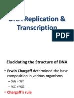 Classppt-DNA2