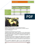 Variedades de Aceituna 73_108