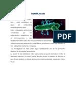 Practica Nº 7 microbiologia