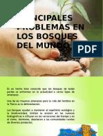Principales problemas en los bosques del mundo