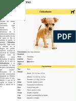 Chihuahueño (perro)