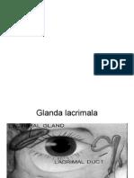 AP Lacrimal