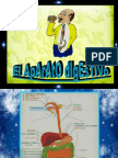 Anatomia Del Aparato Digestivo 1229547077989256 2