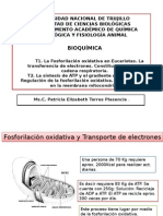 Clase 5. Fosforilación Oxidativa