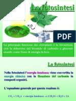 7. La Fotosintesi
