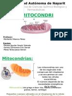 MITOCONDRIAS EXPosicion