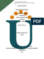 Mapaconceptual Analisis de Articulos (1)