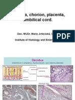 1619_MJ-Decidua, Chorion, Placenta, Umbilical Cord