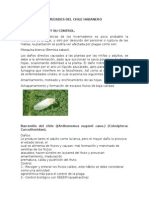 Plagas y Enfermedades Del Chile Habanero