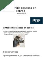 Linfadenitis Caseosa en Cabras