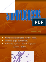 12 Staphylococcus