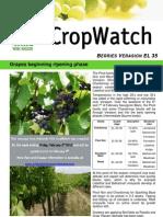 Adelaide Hills Crop Watch 020210