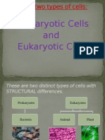 two-types-of-cells-1207241309549229-9