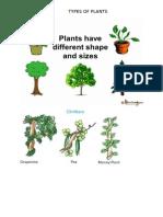 Plants pictures