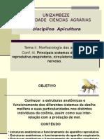 Conf III Tema II Morofisioogía Das Abelhas