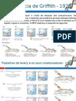 Diapositivos Ficha Biologia