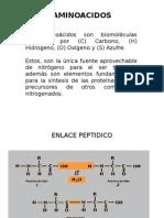 AMINOACIDOS FARMA