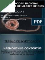 Parasitologia Nematodos Expo