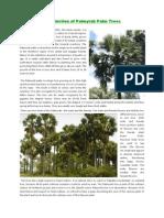 Introduction of Palmyrah Palm