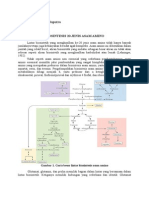 Biosintesis 20 Jenis Asam Amino