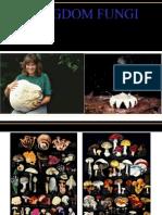 Presentasi Fungi