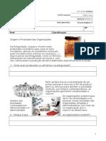 Ficha de Trabalho Nº7 - Origem e Finalidade Das Organizações